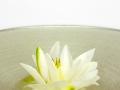 18-09-16_10h14m23s-Jonnie-Boer-(De-Librije)---Waterlelie